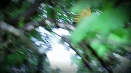Otobi Jungle joy films