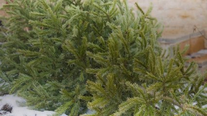 How to Get Rid of Your Christmas Tree the Eco-Friendly Way