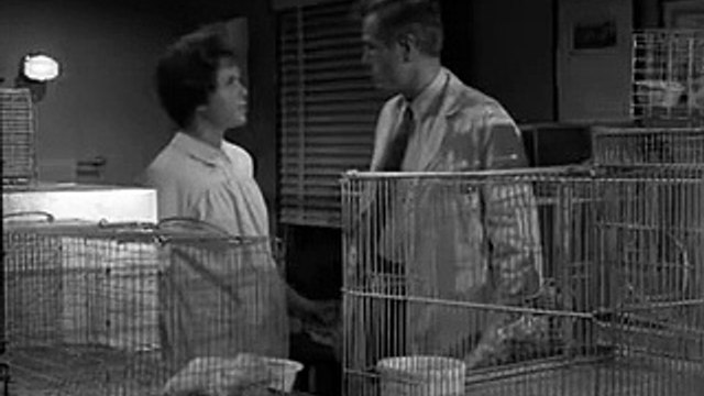 The Fugitive S03E07 All the Scared Rabbits