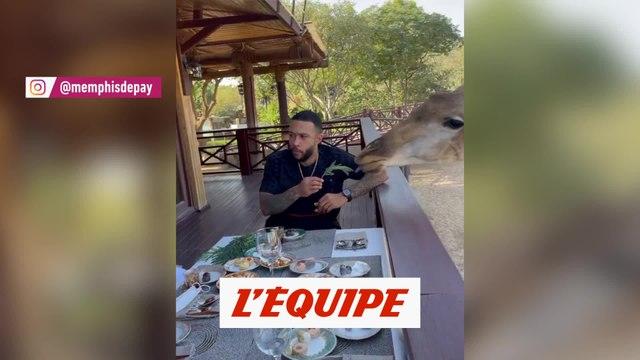 Quand Memphis Depay déjeune avec une girafe - Foot - WTF