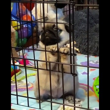 Try not to AWW Cute baby animals Videos Compilation Funniest and cutest moments of animal