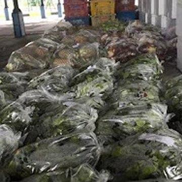 Maqis rampas dua tan buah, sayur-sayuran