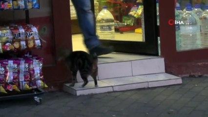 Soğuk Havada İç Isıtan Görüntü...Marketin Önünde Bekleyen Kediye Süt Getirdi