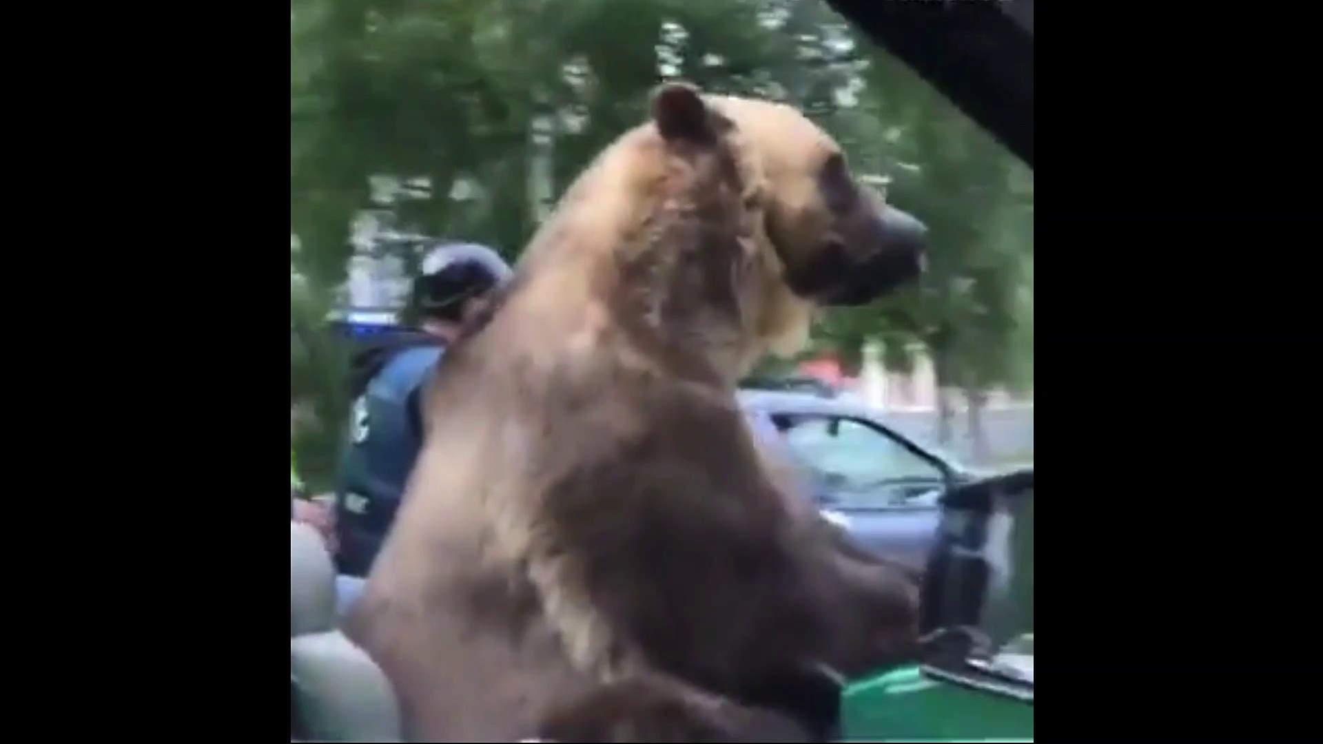 The bear ride tricycle motorcycles