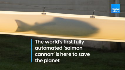 Fully Automated Salmon Cannon is Here to Save the Planet