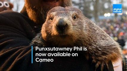 Punxsutawney Phil on Cameo!