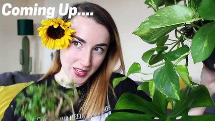 Plant Haul, FLOWERING PLANT, NATURE