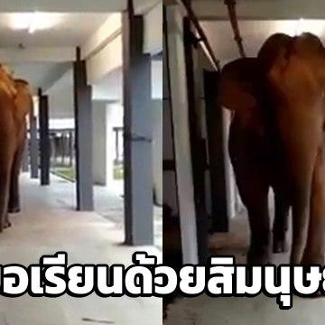 นาทีระทึก ช้างป่าบุกโรงเรียน เดินประจันหน้าคนถ่ายคลิป ใจหายวาบ