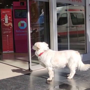 A devoted dog spends a week waiting for her owner at the entrance of a hospital