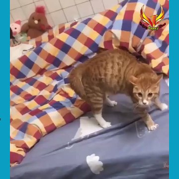 Cats Funny Videos, Funny animals Video, Enjoy Happy Time #cats #animals #funny