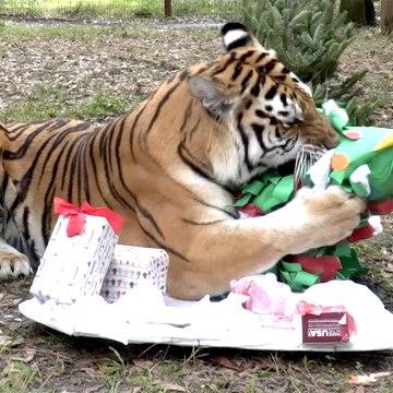 Meowy Big Cat Christmas