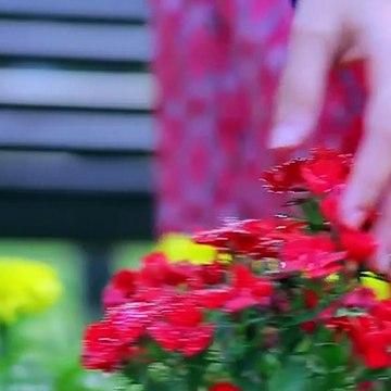 Pehli Si Muhabbat - Episode 1 _ English SubTitles _ Only On Ary Digital _