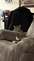 Un agent chat abandonne sa mission