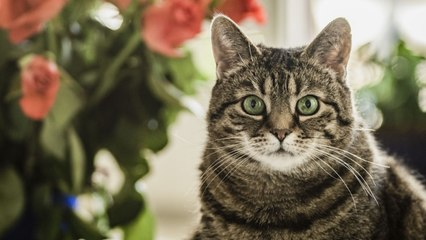 Australia exterminará a millones de gatos para evitar que acaben con la fauna salvaje