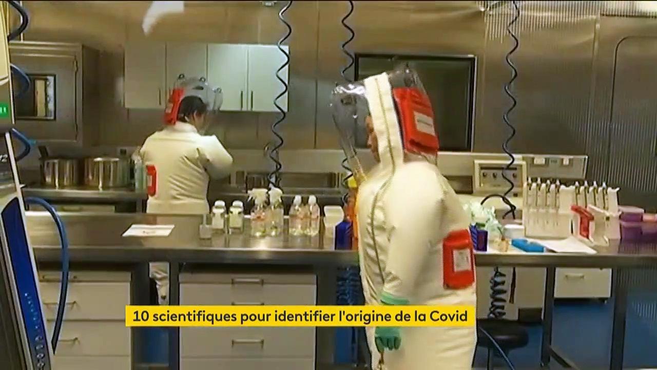 Coronavirus : à Wuhan, l'OMS entame son enquête sur les origines du virus