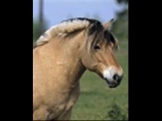 Non un cheval ne se mange pas