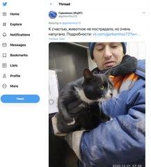 Buzz : En Russie, un chat sauvé de la déchèterie devient vice-ministre de l'environnement