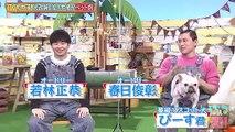 バラエティ 無料視聴 - バラエティー無料視聴 動画 9tsu Miomio -   どうぶつピース    動画 9tsu  2021年2月4日