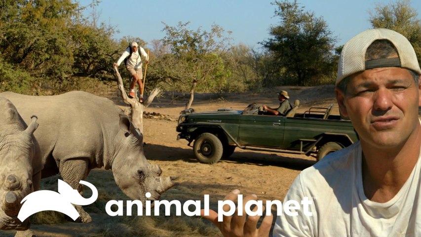 Darran resgata o Frank de um ataque de rinocerontes   Wild Frank vs Darran   Animal Planet Brasil