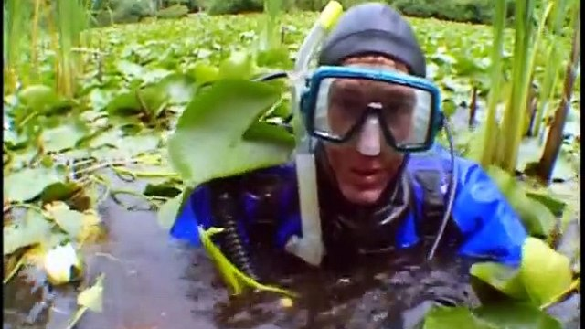 Bill Nye the Science Guy - S04E13 Amphibians