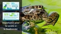 Quelques zones humides d'île de France 2021.