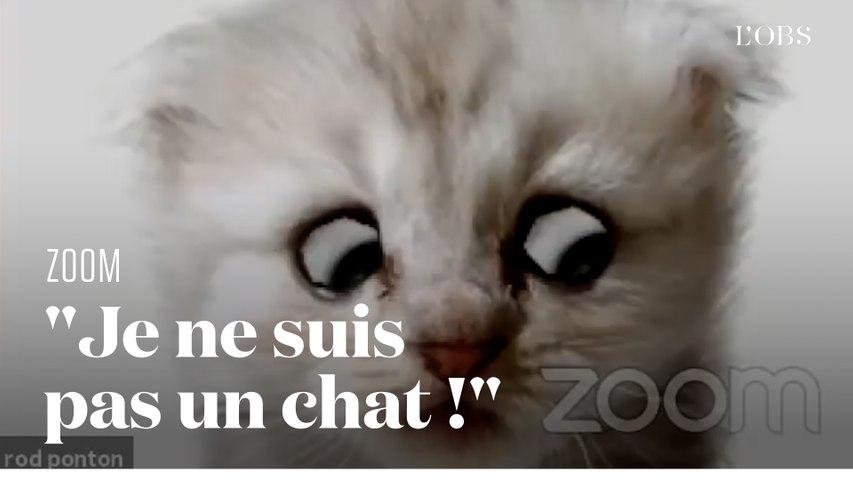 En réunion sur Zoom, un avocat du Texas se retrouve coincé dans un filtre chat