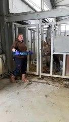 Preparing Chanua the Black Rhino for her journey to Tanzania