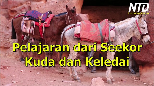Kisah Inspiratif:  Pelajaran dari Seekor Kuda dan Keledai