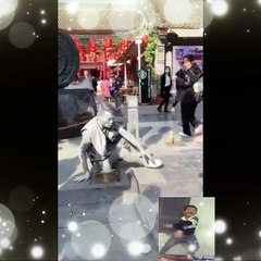 Video tiktok
