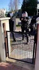 Une intervention policière musclée à Trazegnies
