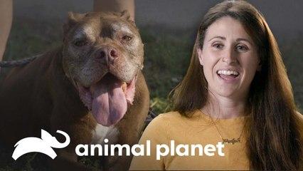 ¿Por qué adoptar perros mayores es una buena opción? | Pit Bulls y convictos | Animal Planet