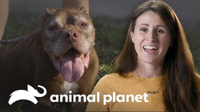 ¿Por qué adoptar perros mayores es una buena opción?   Pit Bulls y convictos   Animal Planet