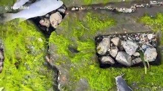 Des milliers de poissons mort de froid sur ce port du Texas