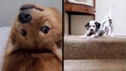 Adorable Pups March To The Beat Of Their Own Drum