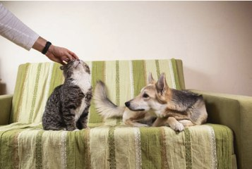Stressed Out? Go Pet Your Dog or Your Cat