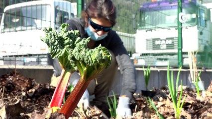 Reportage - Du jardinage au boulot ! - Reportage - TéléGrenoble
