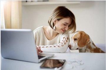 Comment sortir votre chien de l'ennui ? Voici quelques astuces