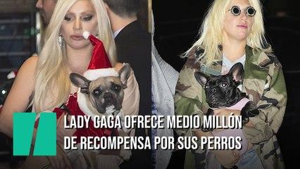 Medio millón de dólares para el que encuentre a los perros de Lady Gaga