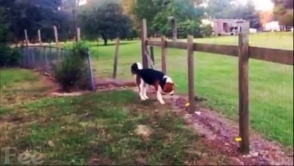 10 Dogs Shocked By Electric Fences Caught on Camera! COMPILATION
