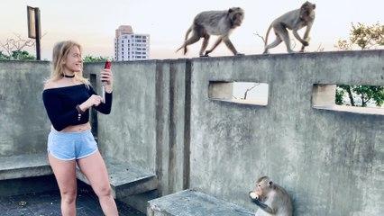 Monkey Hill ~ Khao Sam Muk Viewpoint ~ Near Bangkok Thailand