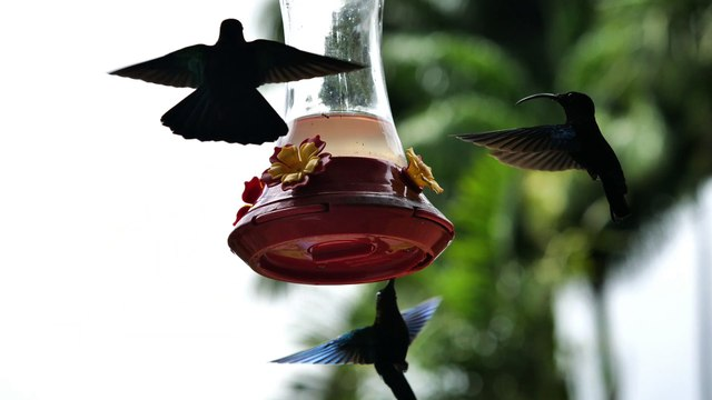 Marcus Singletary - Subversive Birds (Video)