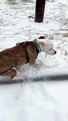 Cão fica em êxtase na neve ao ponto de dono perder o controlo da situação...
