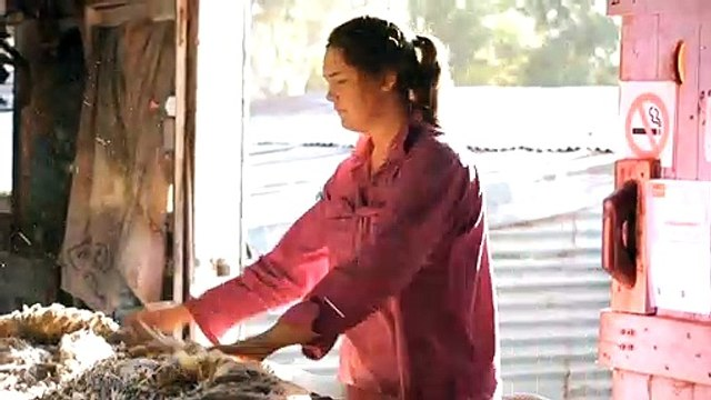 Sheep shearers in high demand due to worker shortages