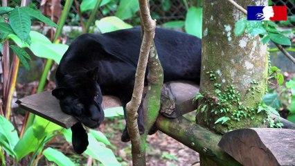 Inspection en faune sauvage captive au Zoo de Guadeloupe
