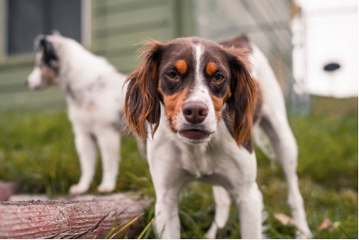 Ways For New Owners to Prevent Dogs From biting