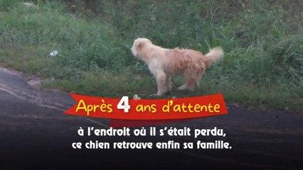 Après 4 ans d'attente à l'endroit où il s'était perdu, ce chien retrouve enfin sa famille.