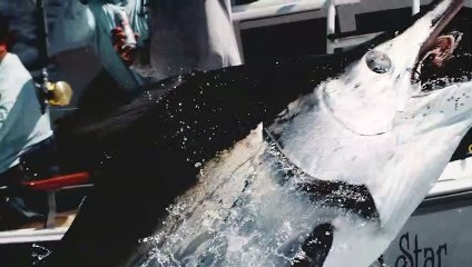 Sport Fishing Television 2021 Season Teaser