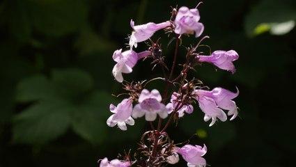 13 Perennials That'll Brighten Your Garden