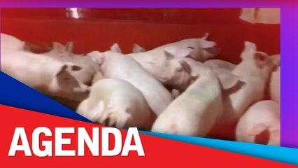 AGAP questions DA move to increase pork, chicken imports