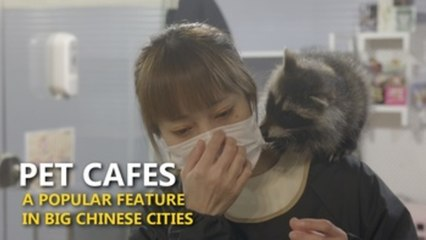 Take a walk on the wild side at one of China's exotic pet cafes